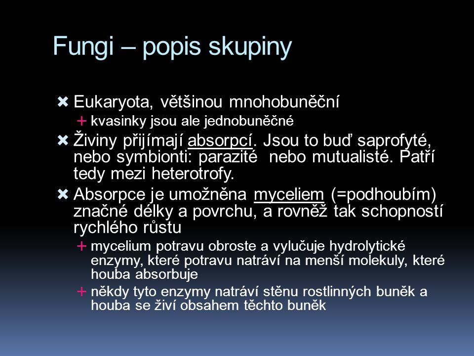 Fungi – popis skupiny Eukaryota, většinou mnohobuněční