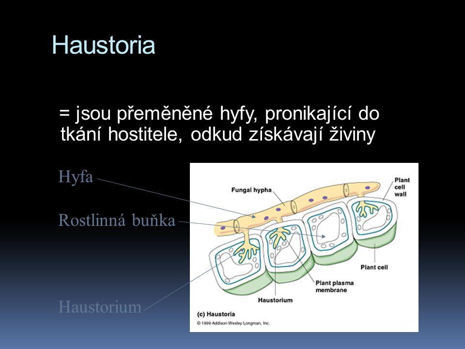 Haustoria = jsou přeměněné hyfy, pronikající do tkání hostitele, odkud získávají živiny. Hyfa. Rostlinná buňka.