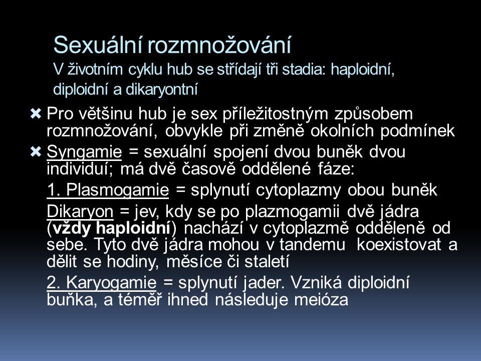 Sexuální rozmnožování V životním cyklu hub se střídají tři stadia: haploidní, diploidní a dikaryontní