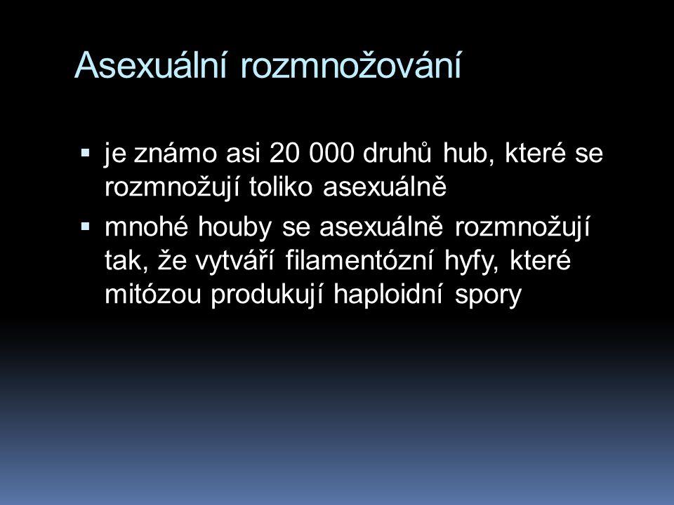 Asexuální rozmnožování