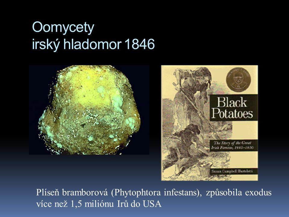 Oomycety irský hladomor 1846