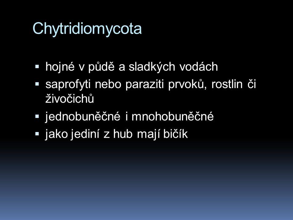 Chytridiomycota hojné v půdě a sladkých vodách