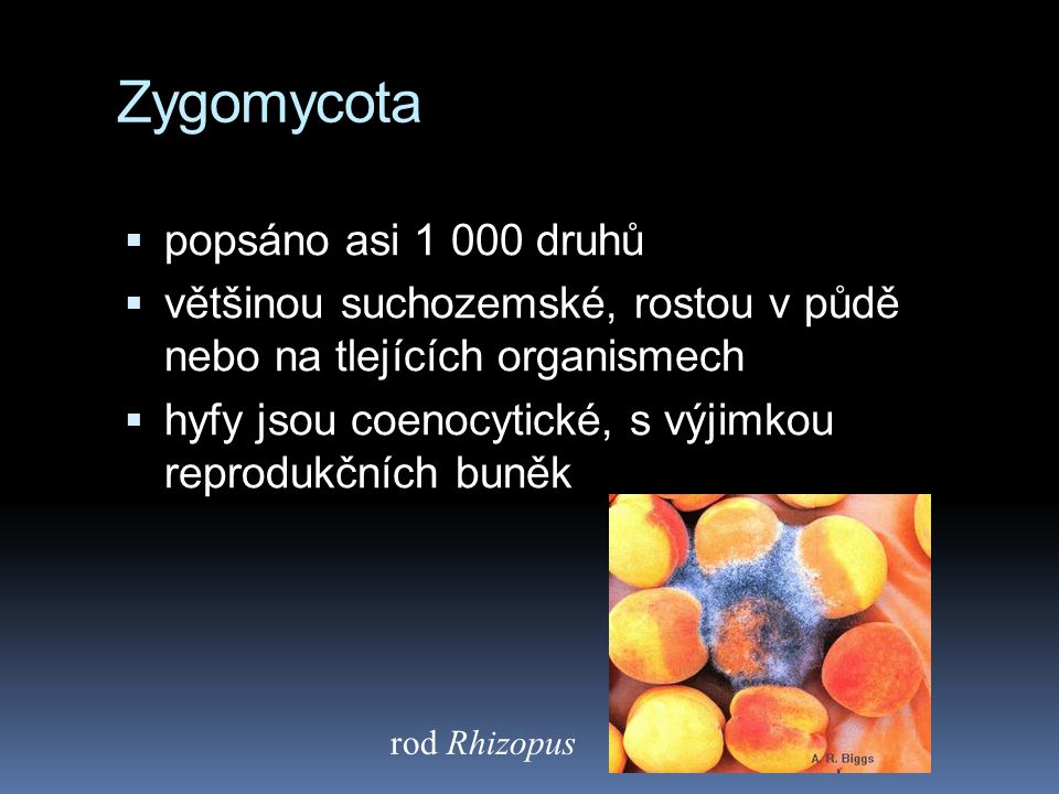 Zygomycota popsáno asi 1 000 druhů