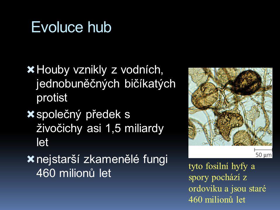 Evoluce hub Houby vznikly z vodních, jednobuněčných bičíkatých protist