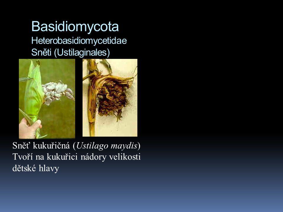 Basidiomycota Heterobasidiomycetidae Sněti (Ustilaginales)