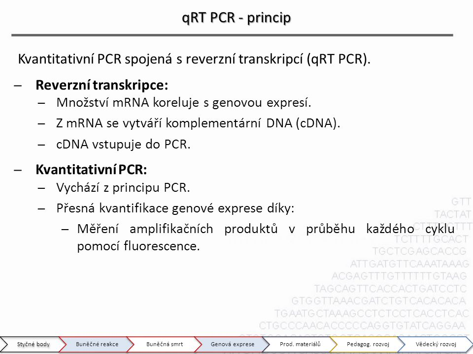 qRT PCR - princip Kvantitativní PCR spojená s reverzní transkripcí (qRT PCR). Reverzní transkripce: