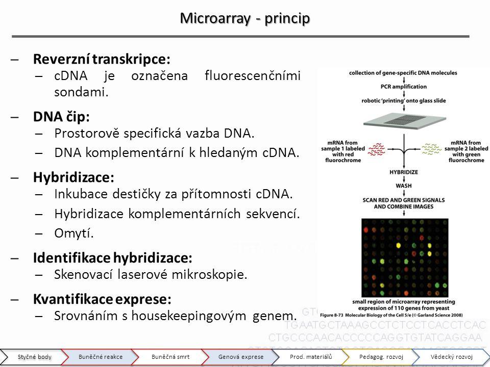 Microarray - princip Reverzní transkripce: DNA čip: Hybridizace: