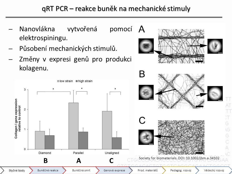 qRT PCR – reakce buněk na mechanické stimuly