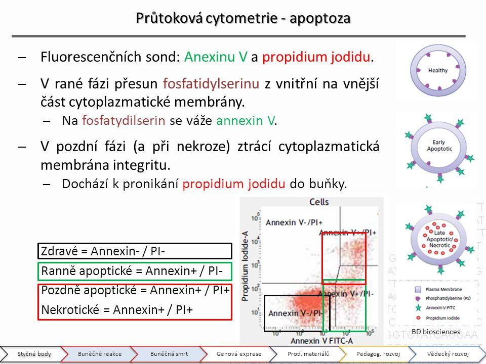 Průtoková cytometrie - apoptoza