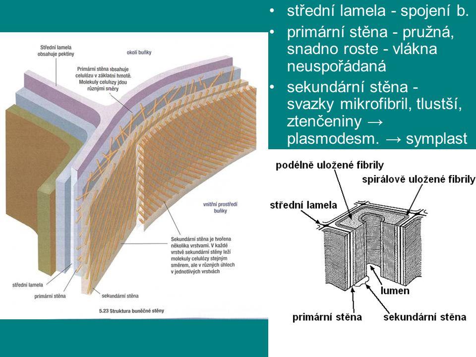 střední lamela - spojení b.