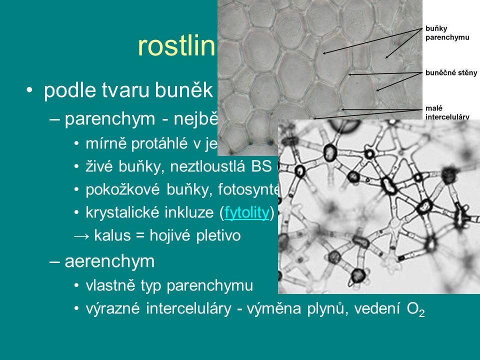 rostlinná pletiva podle tvaru buněk a tloustnutí BS