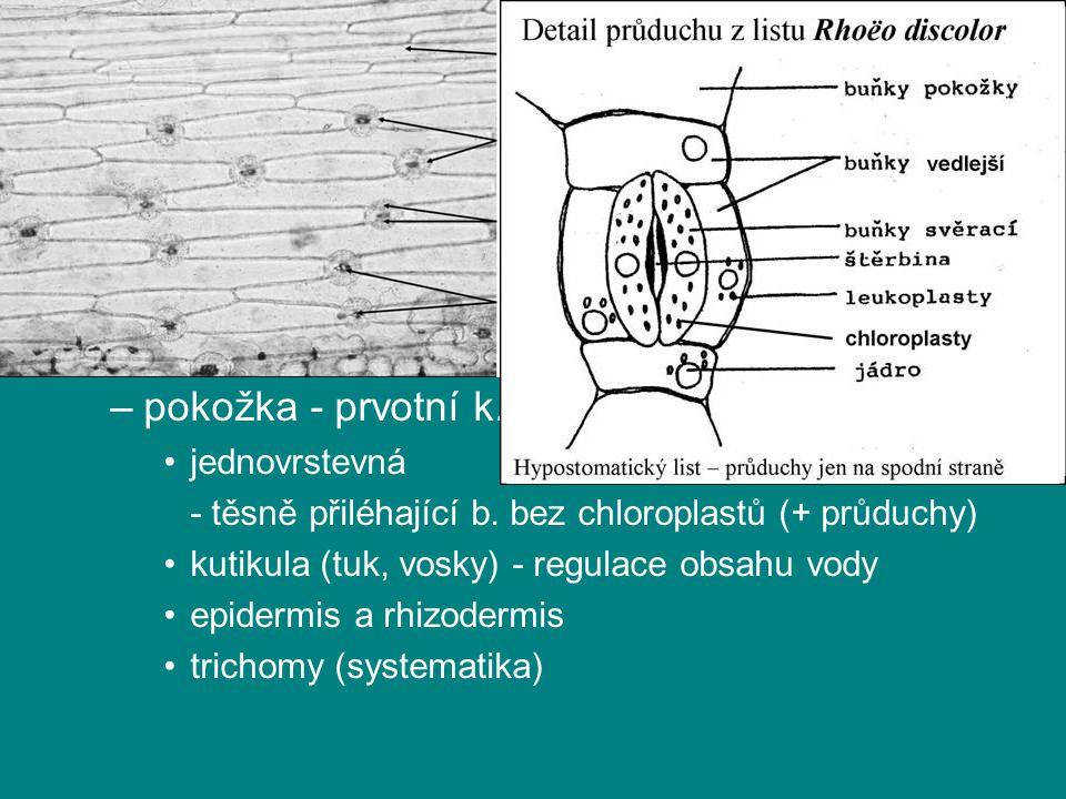 rostlinná pletiva krycí pletiva povrch orgánů - ochrana