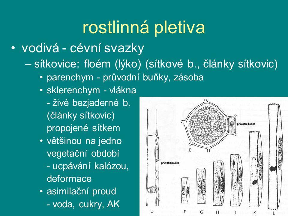 rostlinná pletiva vodivá - cévní svazky