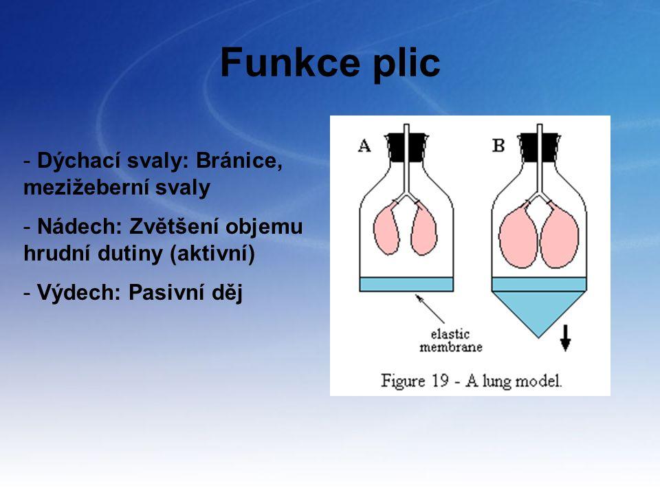 Funkce plic Dýchací svaly: Bránice, mezižeberní svaly
