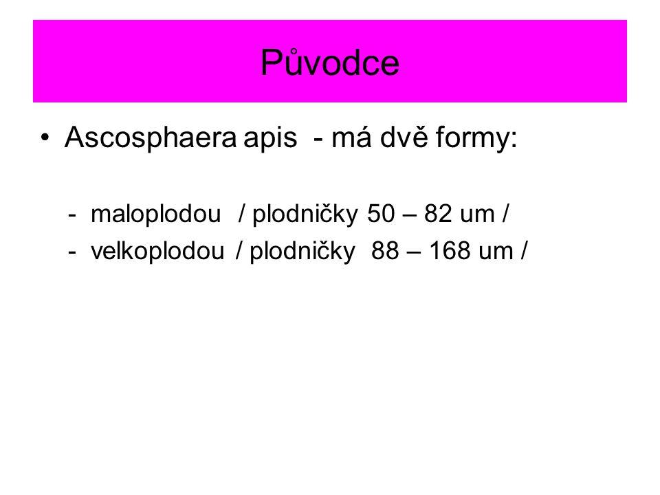 Původce Ascosphaera apis - má dvě formy: