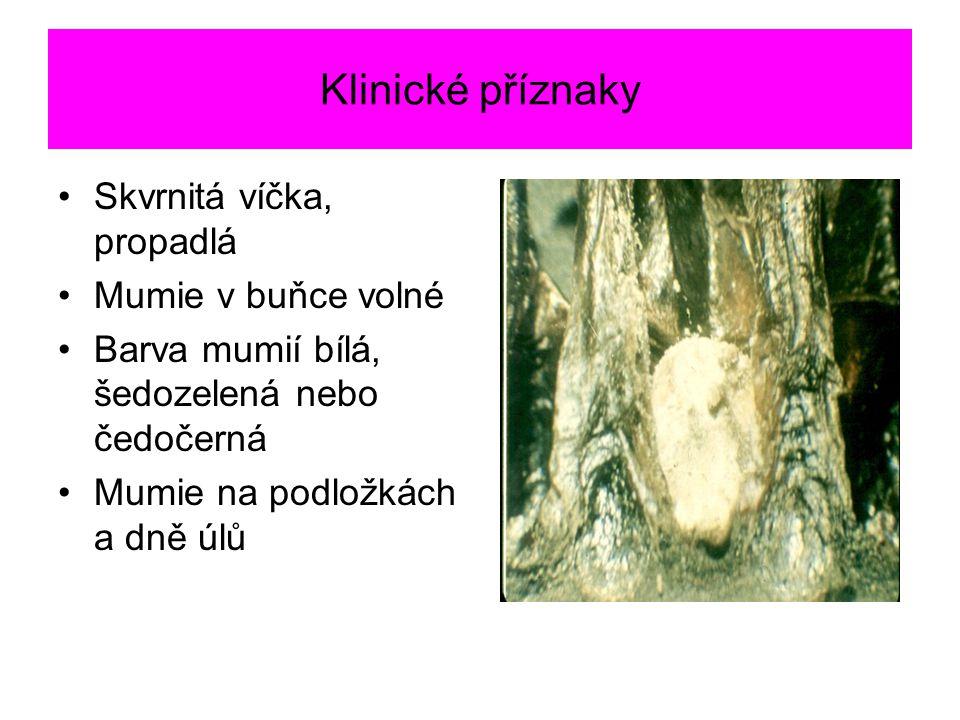 Klinické příznaky Skvrnitá víčka, propadlá Mumie v buňce volné