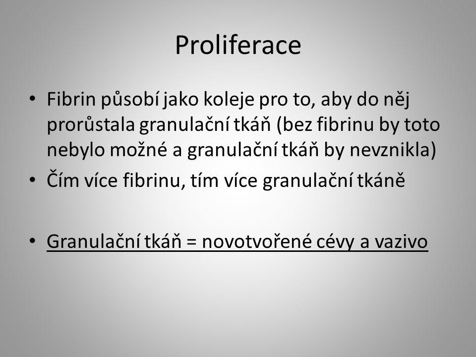 Proliferace Fibrin působí jako koleje pro to, aby do něj prorůstala granulační tkáň (bez fibrinu by toto nebylo možné a granulační tkáň by nevznikla)