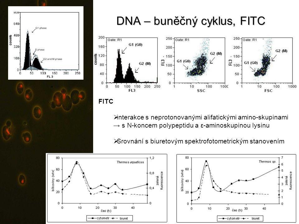DNA – buněčný cyklus, FITC