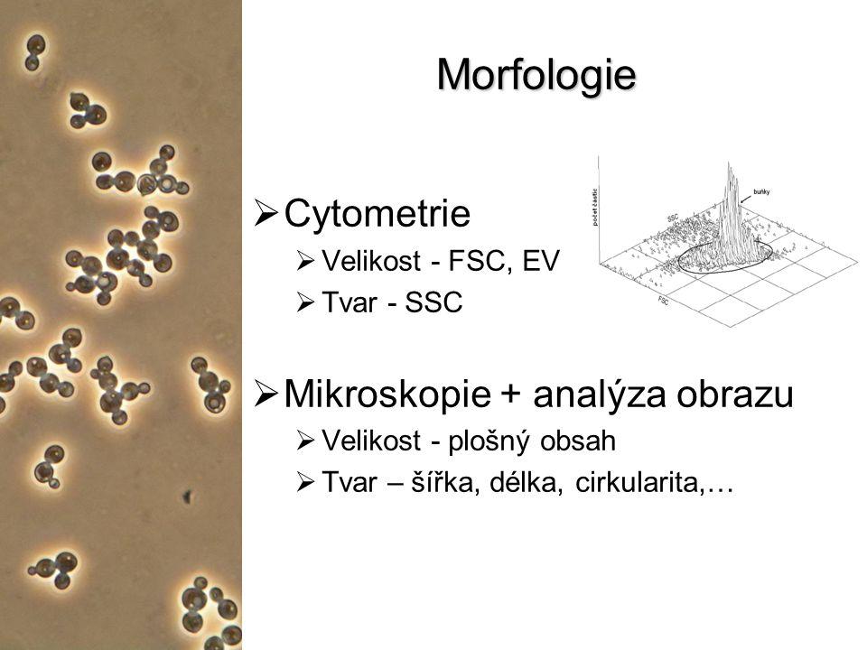Morfologie Cytometrie Mikroskopie + analýza obrazu Velikost - FSC, EV
