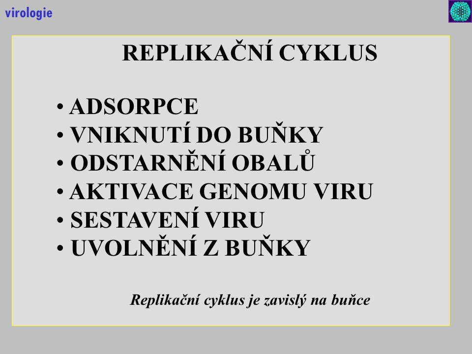 Replikační cyklus je zavislý na buňce