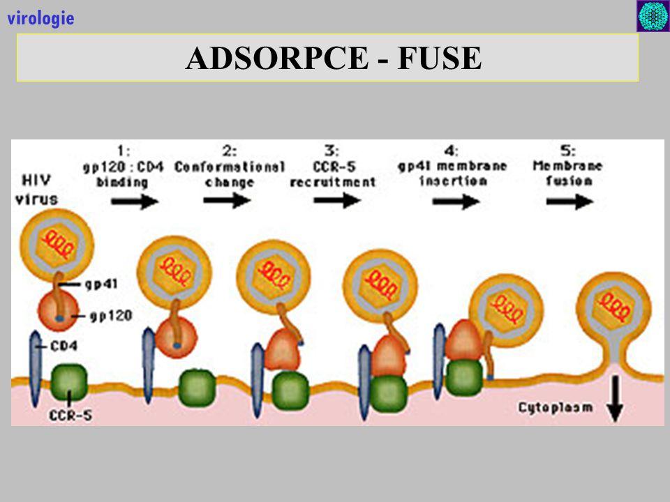 virologie ADSORPCE - FUSE