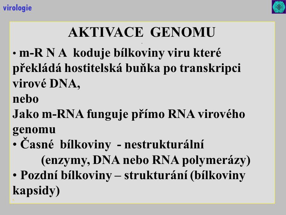 virologie AKTIVACE GENOMU. .