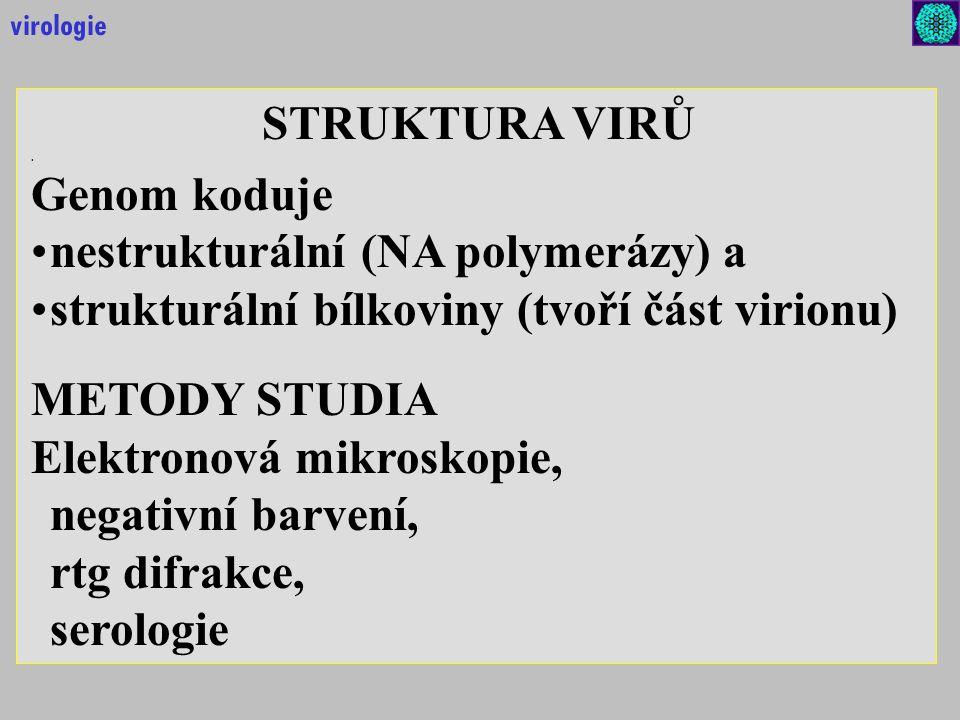 nestrukturální (NA polymerázy) a