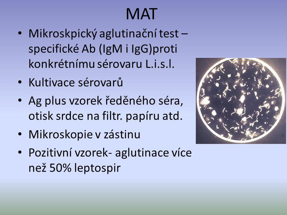 MAT Mikroskpický aglutinační test – specifické Ab (IgM i IgG)proti konkrétnímu sérovaru L.i.s.l. Kultivace sérovarů.