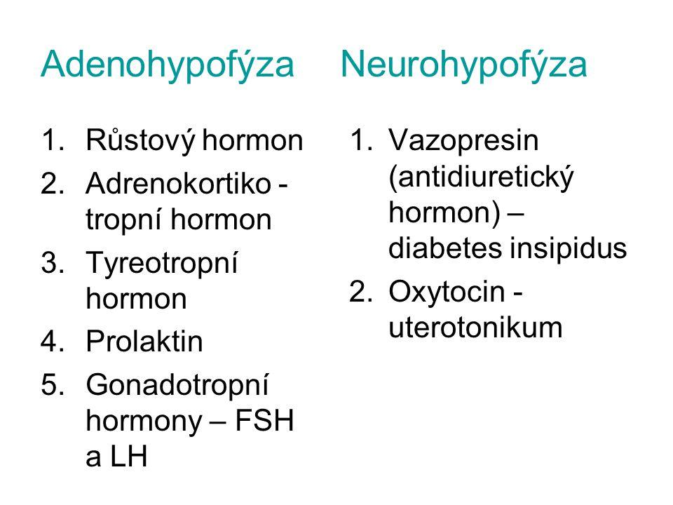 Adenohypofýza Neurohypofýza