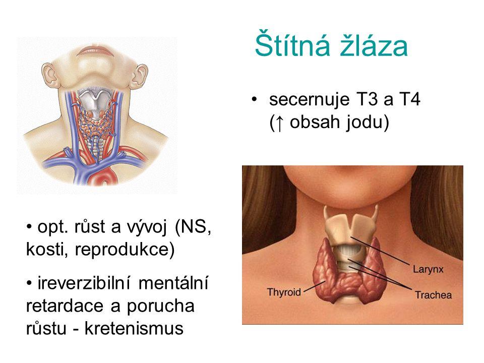 Štítná žláza secernuje T3 a T4 (↑ obsah jodu)