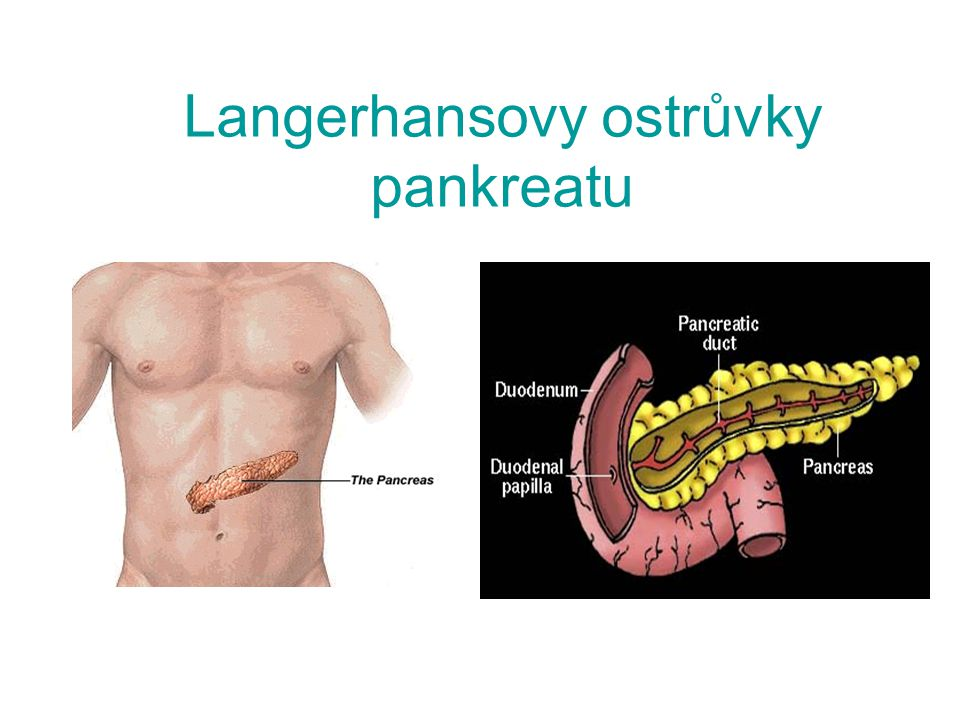 Langerhansovy ostrůvky pankreatu