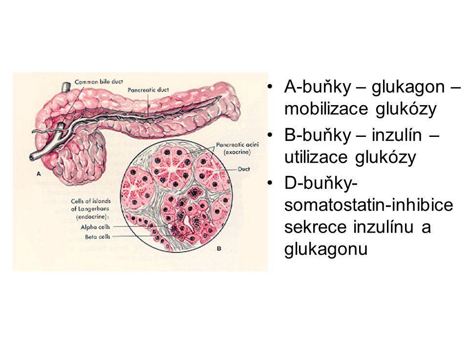 A-buňky – glukagon – mobilizace glukózy