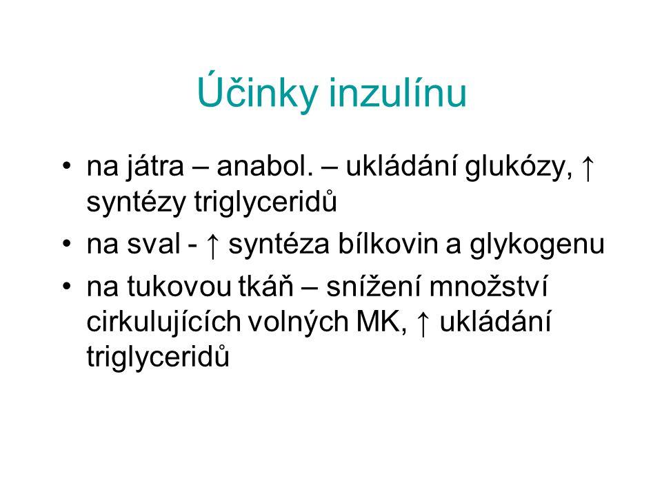 Účinky inzulínu na játra – anabol. – ukládání glukózy, ↑ syntézy triglyceridů. na sval - ↑ syntéza bílkovin a glykogenu.