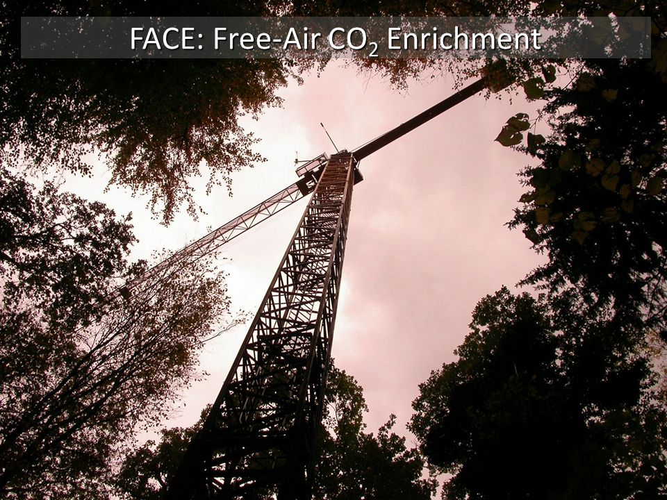 FACE: Free-Air CO2 Enrichment