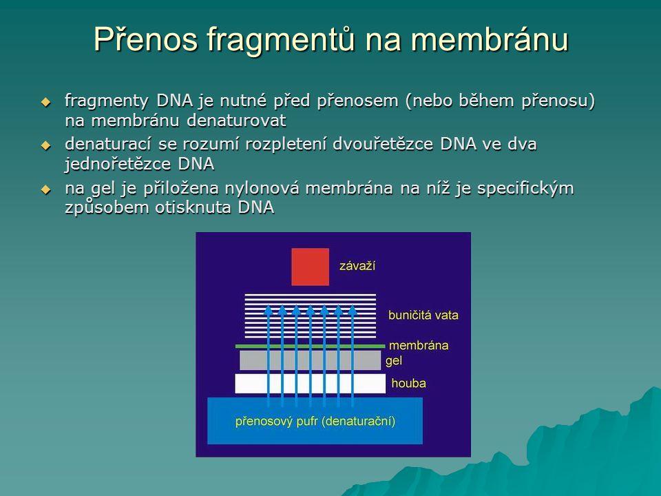 Přenos fragmentů na membránu