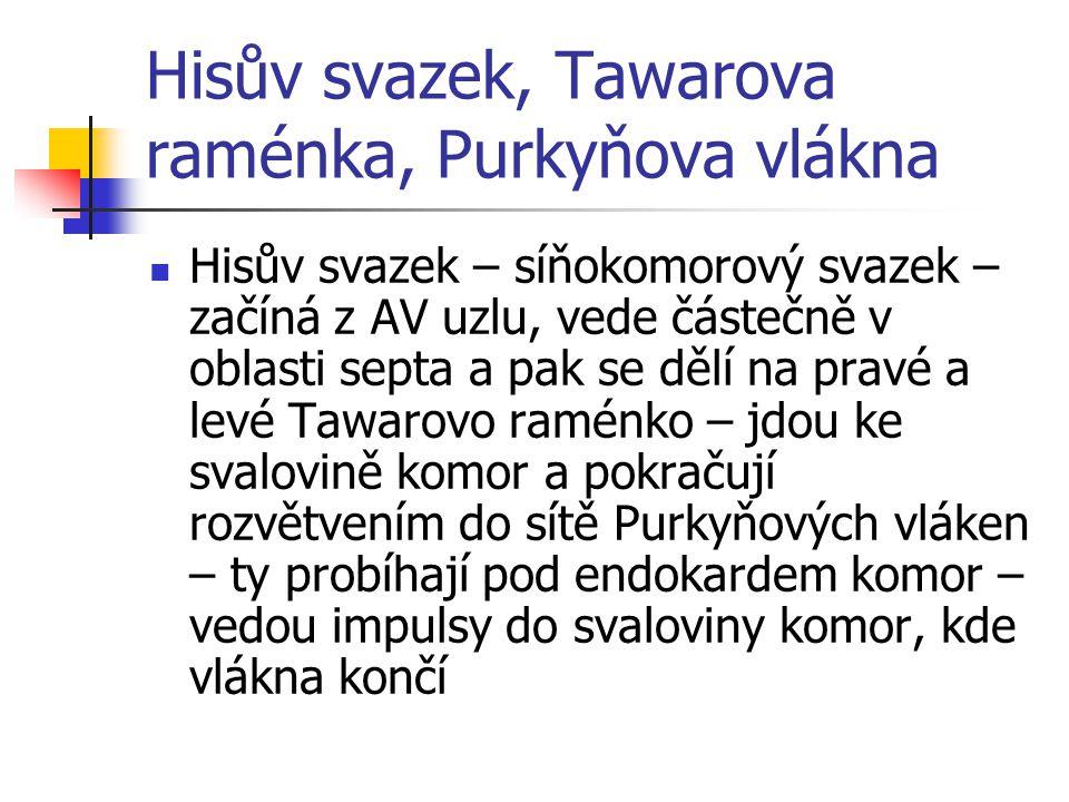 Hisův svazek, Tawarova raménka, Purkyňova vlákna