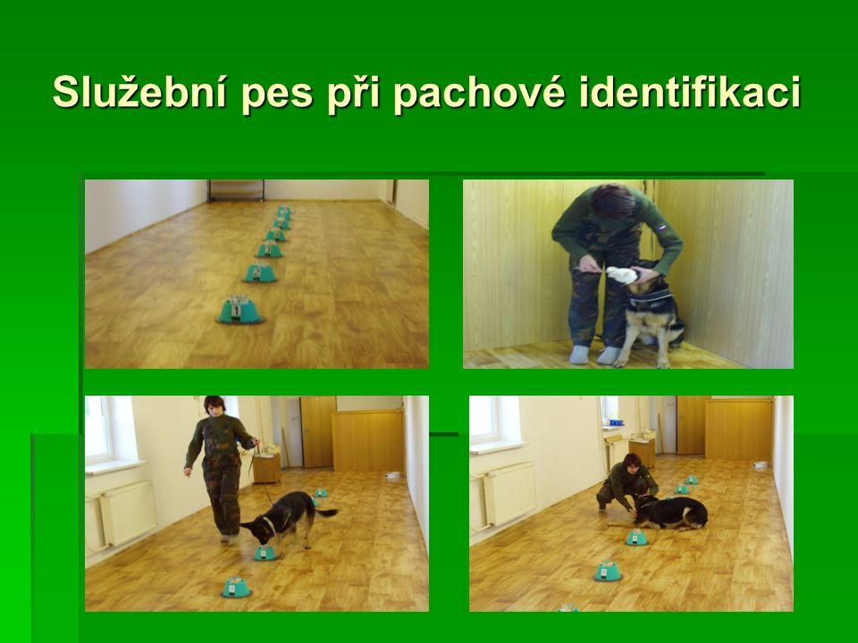 Služební pes při pachové identifikaci