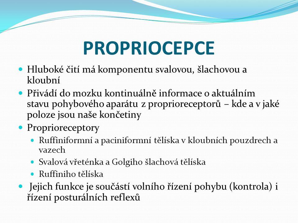 PROPRIOCEPCE Hluboké čití má komponentu svalovou, šlachovou a kloubní