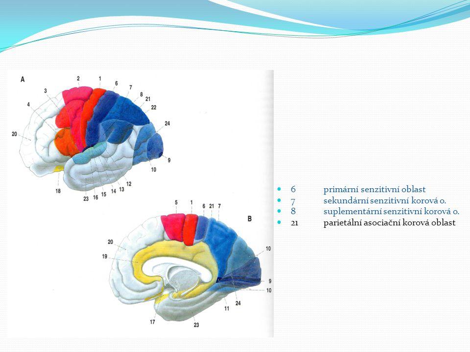 6 primární senzitivní oblast 7 sekundární senzitivní korová o.