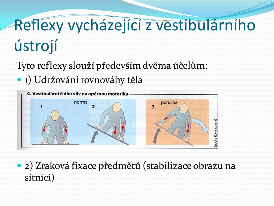 Reflexy vycházející z vestibulárního ústrojí