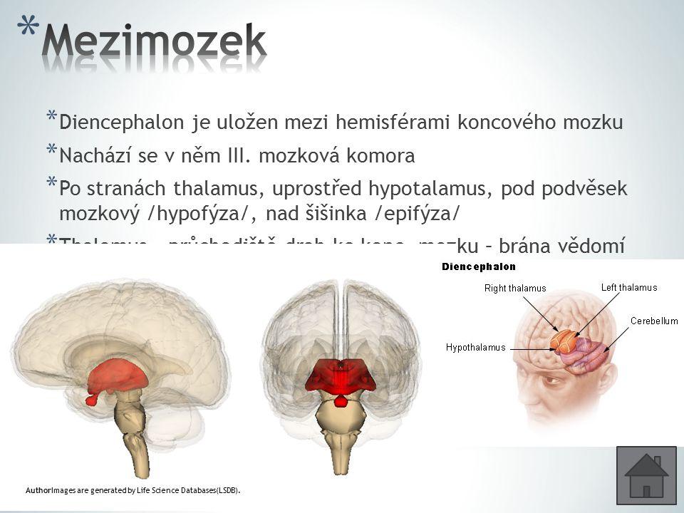 Mezimozek Diencephalon je uložen mezi hemisférami koncového mozku