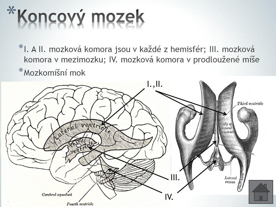 Koncový mozek I. A II. mozková komora jsou v každé z hemisfér; III. mozková komora v mezimozku; IV. mozková komora v prodloužené míše.