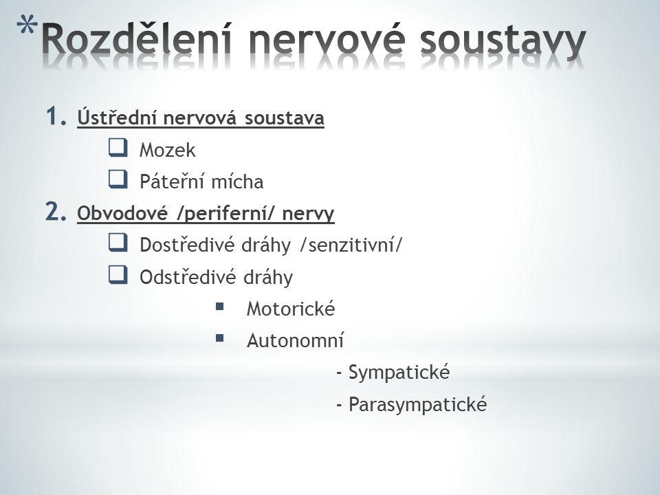Rozdělení nervové soustavy