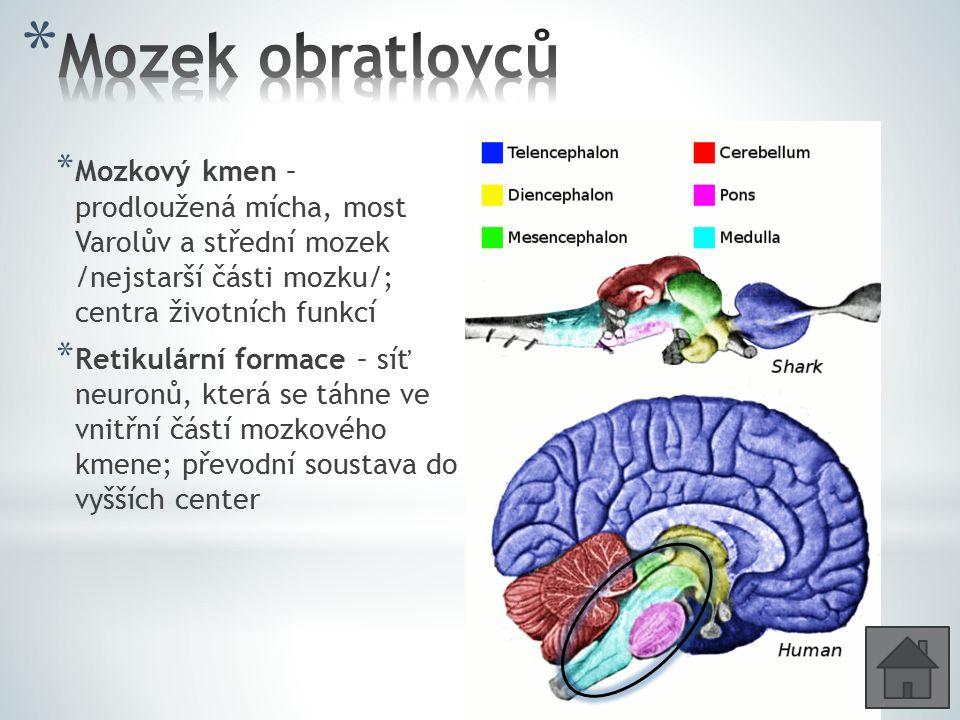 Mozek obratlovců Mozkový kmen – prodloužená mícha, most Varolův a střední mozek /nejstarší části mozku/; centra životních funkcí.