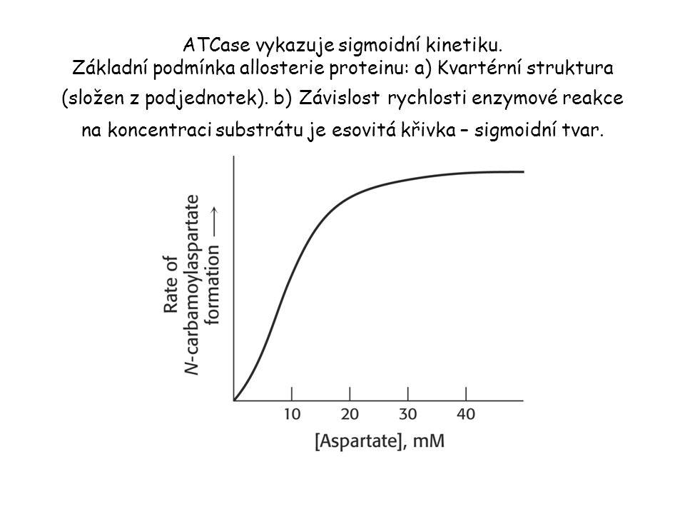 ATCase vykazuje sigmoidní kinetiku