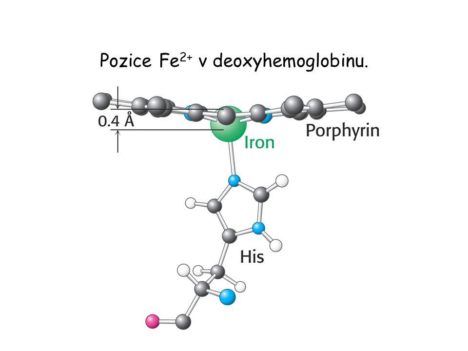 Pozice Fe2+ v deoxyhemoglobinu.