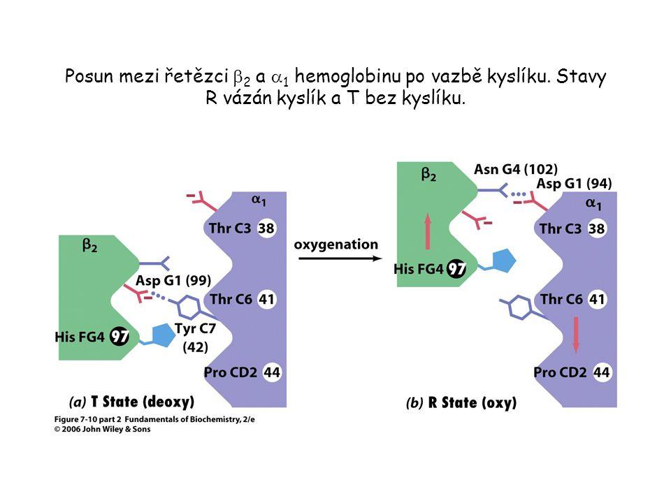 Posun mezi řetězci b2 a a1 hemoglobinu po vazbě kyslíku