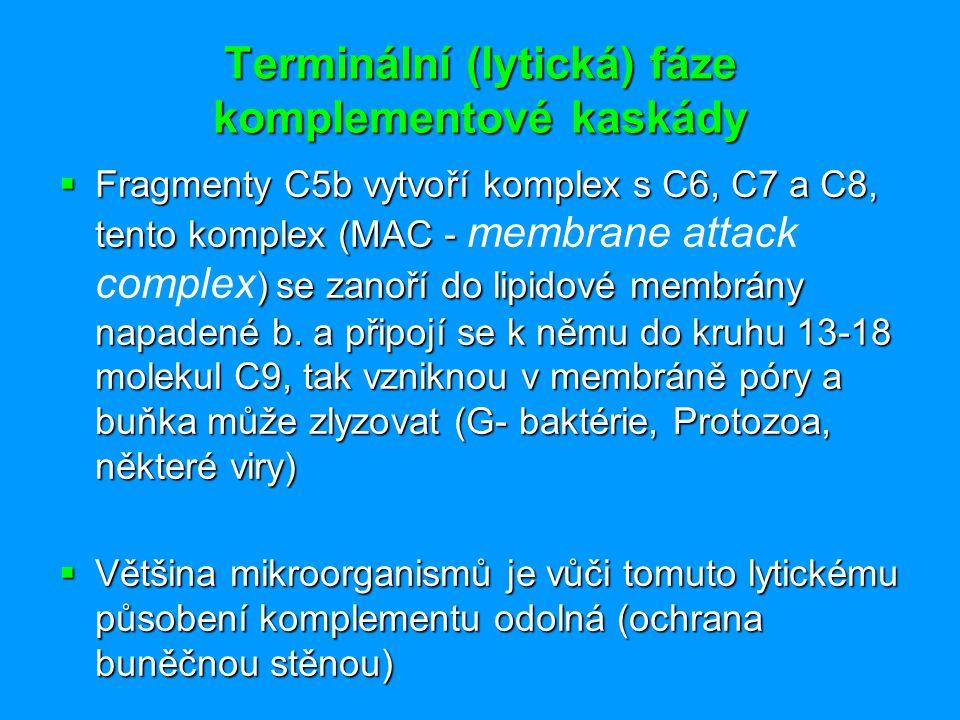 Terminální (lytická) fáze komplementové kaskády