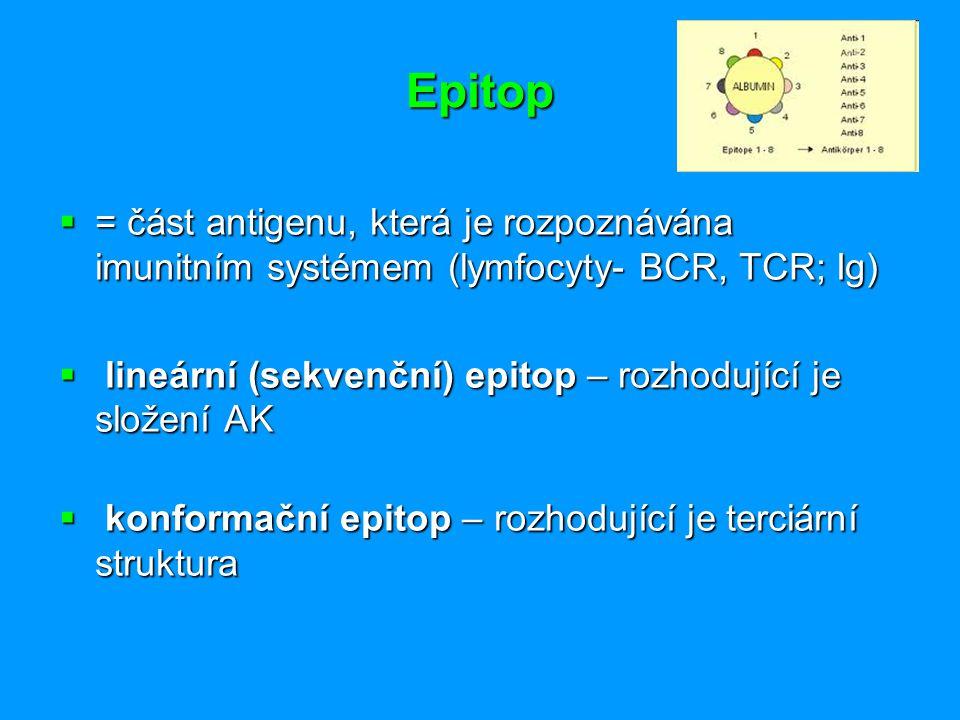 Epitop = část antigenu, která je rozpoznávána imunitním systémem (lymfocyty- BCR, TCR; Ig) lineární (sekvenční) epitop – rozhodující je složení AK.