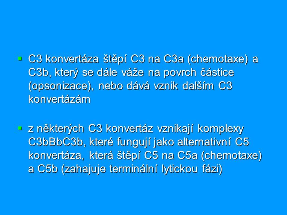 C3 konvertáza štěpí C3 na C3a (chemotaxe) a C3b, který se dále váže na povrch částice (opsonizace), nebo dává vznik dalším C3 konvertázám